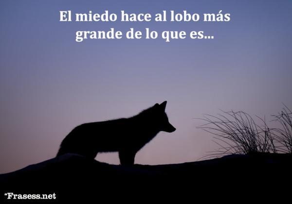 Frases de lobos - El miedo hace al lobo más grande de lo que es.