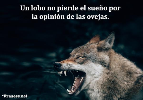 Frases de lobos - Un lobo no pierde el sueño por la opinión de las ovejas.