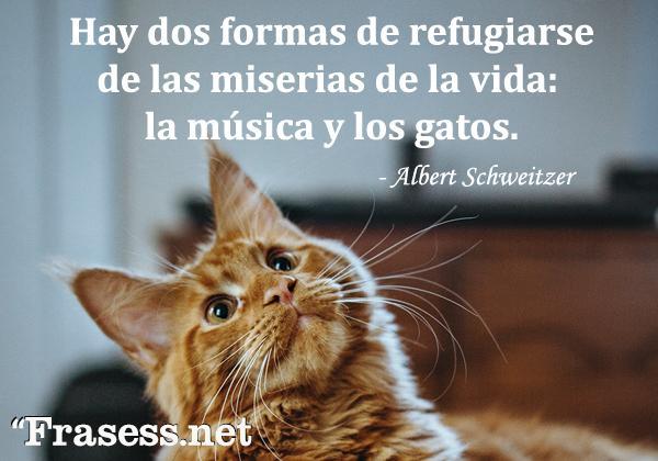 Frases de gatos - Hay dos formas de refugiarse de las miserias de la vida: la música y los gatos.