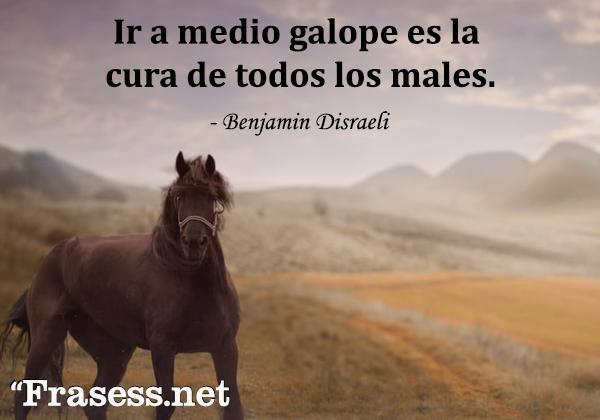 Frases de caballos - Ir a medio galope es la cura de todos los males.