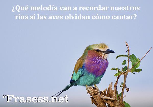 Frases del medio ambiente - ¿Qué melodía van a recordar nuestros ríos si las aves olvidan cómo cantar?
