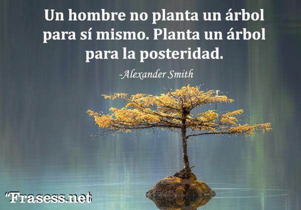 Frases de árboles -  Un hombre no planta un árbol para sí mismo. Planta un árbol para la posteridad.