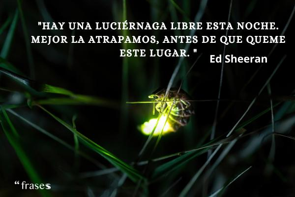 Frases de Ed Sheeran - Hay una luciérnaga libre esta noche. Mejor la atrapamos, antes de que queme este lugar.