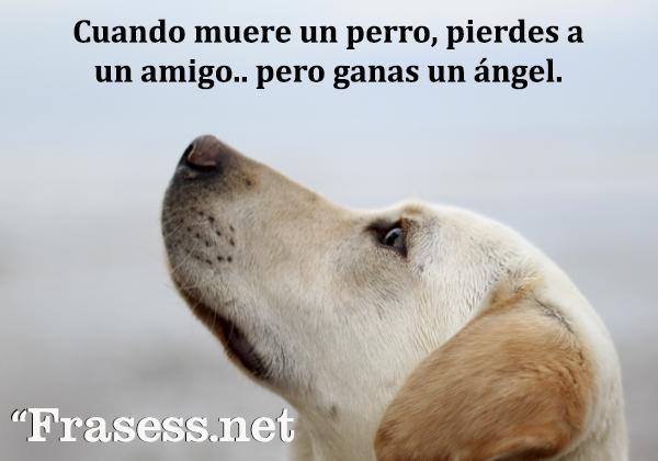 Frases de animales - Cuando muere un perro, pierdes a un amigo... pero ganas un ángel.