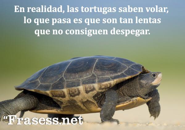 Frases de animales - En realidad, las tortugas saben volar, lo que pasa es que son tan lentas que no consiguen despegar.