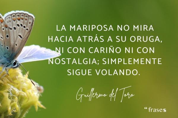 Frases de mariposas para reflexionar - La mariposa no mira hacia atrás a su oruga, ni con cariño ni con nostalgia; simplemente sigue volando.