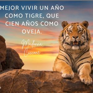 Frases de tigres