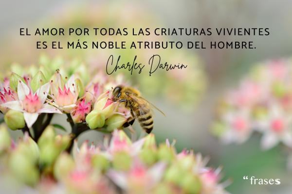 Frases de Charles Darwin - El amor por todas las criaturas vivientes es el más noble atributo del hombre.