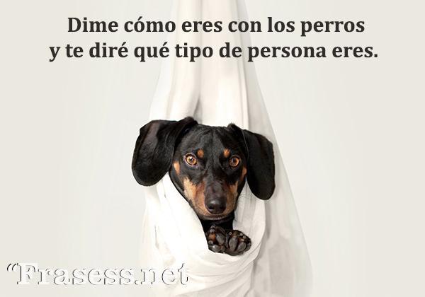 Frases de perros - Dime cómo eres con los perros y te diré qué tipo de persona eres.