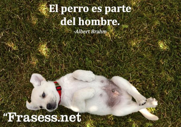 Frases de perros - El perro es parte del hombre.