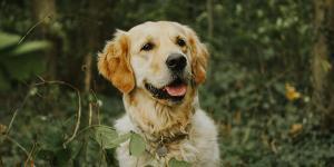 Frases de perros