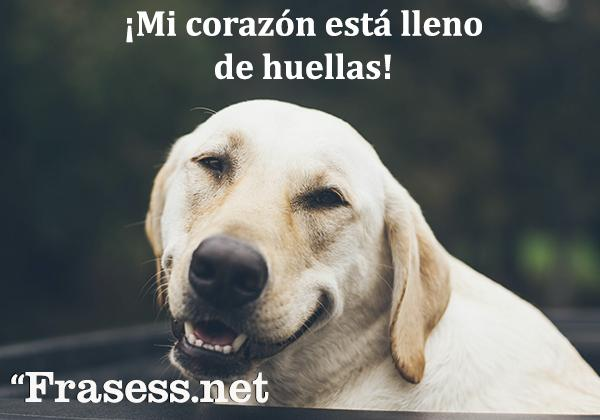 Frases de perros - ¡Mi corazón está lleno de huellas!