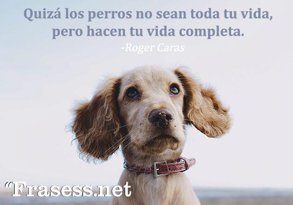 Frases de perros - Quizá los perros no sean toda tu vida, pero hacen tu vida completa.