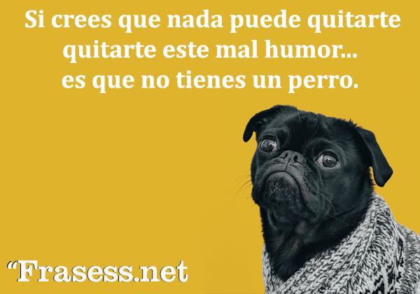 Frases de perros - Si crees que nada puede quitarte este mal humor, es que no tienes un perro.