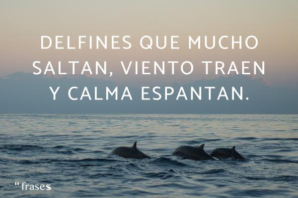 Frases de relajación - Delfines que mucho saltan, viento traen y calma espantan.