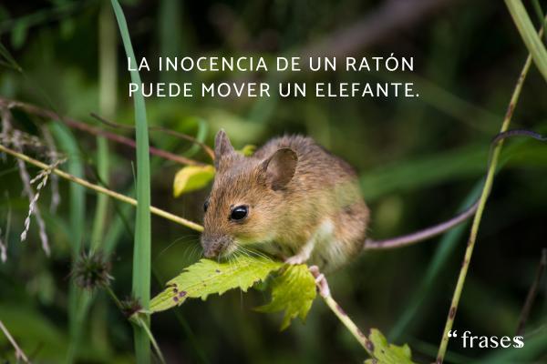 Frases chinas - La inocencia de un ratón puede mover un elefante.