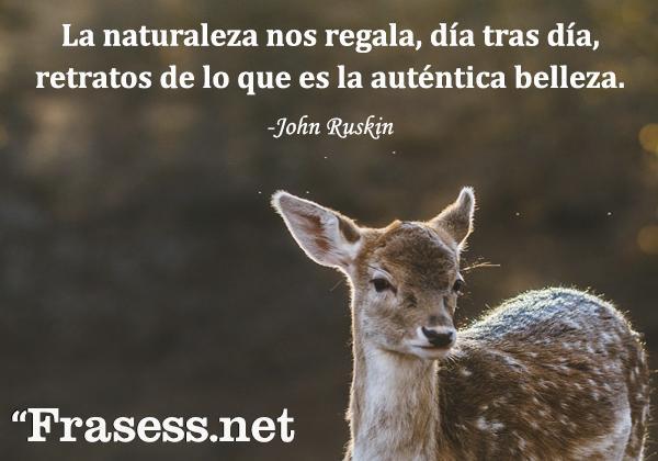 Frases de la naturaleza - La naturaleza nos regala, día tras día, retratos de lo que es la auténtica belleza.