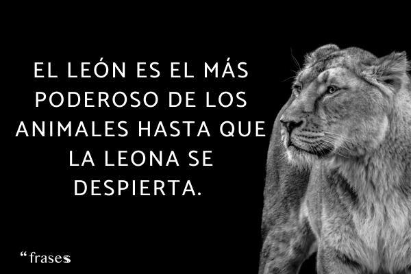Frases de leones - El león es el más poderoso de los animales hasta que la leona se despierta.