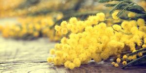 Festa della Donna: consigli per festeggiare l'8 marzo