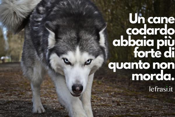 Frasi sui vigliacchi - Un cane codardo abbaia più forte di quanto non morda.